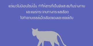 แมวกับพาราเซตามอล