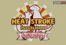 โรคลมแดด (Heat Stroke) ในสัตว์เลี้ยง