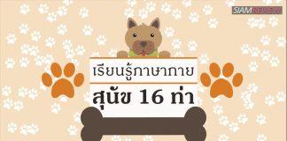 เรียนรู้ภาษากายสุนัข 16 ท่า